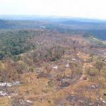 Von 27 Millionen Hektar Wald sind nur noch 12 Millionen übrig