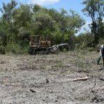Viehzüchter rodet 3.000 Hektar und wird hart bestraft