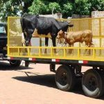 Verkehrspolizei geht nach Pferden 🐎 und Kühen 🐃 auf die Jagd
