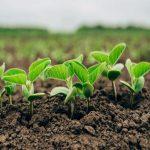 Spitzenplatz bei der Umsetzung der Biotechnologie