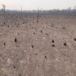 """Brände waren für den Sektor der Viehzucht """"katastrophal"""""""
