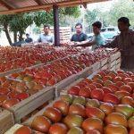 Billige Tomaten