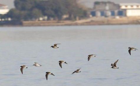 Plastikmüll zeigt erste Auswirkungen auf Zugvögel