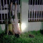 Dieb hängt kopfüber an einem Zaun