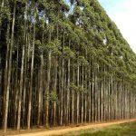 Forstwirtschaft in schwierigen Zeiten