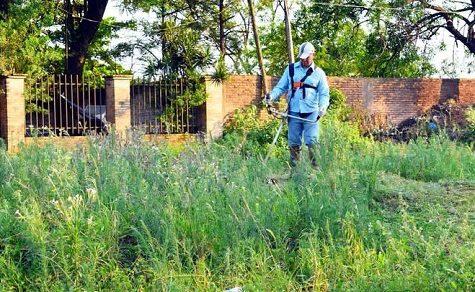 Halten Sie ihre Grundstücke sauber
