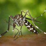 Mücken bevorzugen verschwitzte und dunkelhäutige Menschen