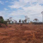 Massive Abholzung nimmt kein Ende