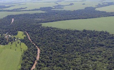 Neues Überwachungssystem für Waldflächen genehmigt