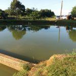 Angler ertrinkt in Teich