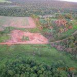 Die Überreste des Atlantische Regenwaldes drohen zu verschwinden
