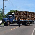 Brennholz beschlagnahmt