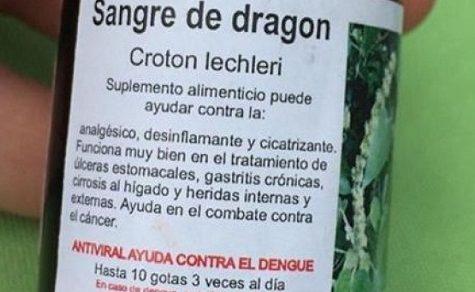 Drachenblut gegen Dengue-Fieber