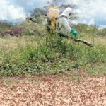 Heuschrecken bedrohen den Chaco
