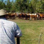 Paraguay gehört zu Ländern mit den geringsten Treibhausgasemissionen