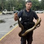 Die Polizei, der Freund und Helfer für eine große Anakonda