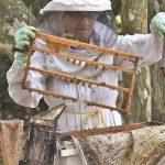 Der geringe Konsum von Honig beunruhigt die Imker