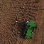 Landwirtschaft unter Quarantäne