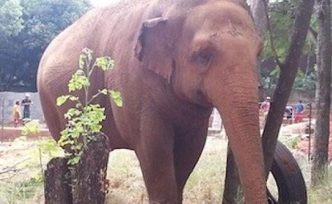 """Die """"Bewohner des Zoos"""" drohen zu verhungern"""