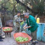 Covid 19: Das Militär hilft den Wärtern im Zoo