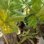 Ein Affe sorgt für Aufregung