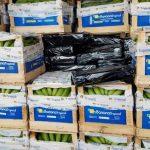 Paraguay, eine Bananenrepublik