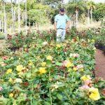Import von Blumen verboten