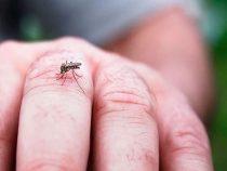 Mehr Tote durch Dengue-Fieber als das Coronavirus