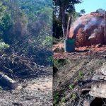 Mehr als 100 Hektar Wald gerodet