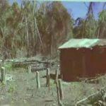 Abholzung unter dem Schutzschirm der Quarantäne