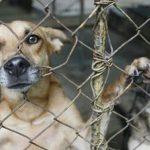 Erste Verurteilung mit Höchststrafe wegen Tierquälerei