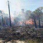 Imkerei durch Waldbrände bedroht