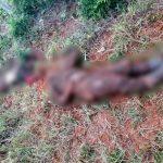 Vermutlich EPP MItglieder erschossen aufgefunden