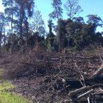 Die Quarantäne wird zur Wilderei und Abholzung genutzt