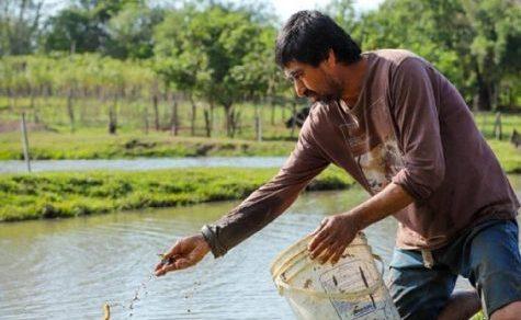 Die Nachfrage bei Setzlingen übersteigt das Angebot für Fischzüchter