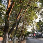 Genehmigung zum Beschneiden von Bäumen erforderlich