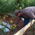 Tomatenmarmelade: Innovativer Geschmack