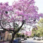 Die Muse der Dichter und Lapachos