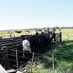Mennoniten vergrößern das Einzugsgebiet ihrer Kolonie