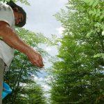 Die Wunderpflanze, die gegen Covid-19 helfen kann