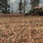 Dürre trifft Ernte: La Niña hält bis Februar 2021 an
