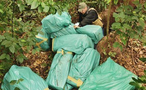 Mehr als 300 Kilo Marihuana in einem Grab entdeckt