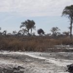 Chaco: Drei Estancia-Besitzer wegen Brandrodung angeklagt