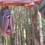 Monat der Fledermäuse