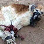 Hund geknebelt und gefesselt weggeworfen