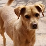Mehrere Hunde vergiftet – Polizei warnt Hundehalter