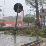 Orkan am Donnerstag und Freitag: Hier drohen Windspitzen bis zu 120 km/h