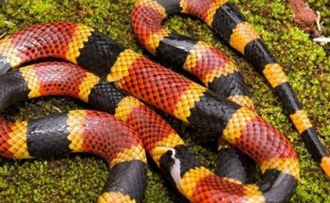 Schlangenbisse häufen sich: 11-Jähriger auf der Intensivstation