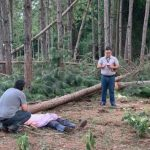 Arbeiter bei Baumfällarbeiten tödlich verletzt