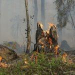Waldbrände in Paraguay durch hohen Marihuana Bedarf beflügelt